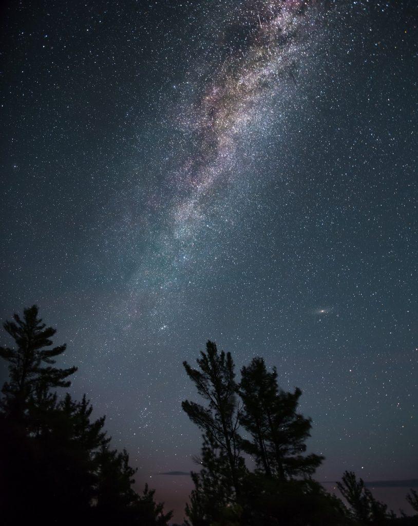 alberi cielo notturno
