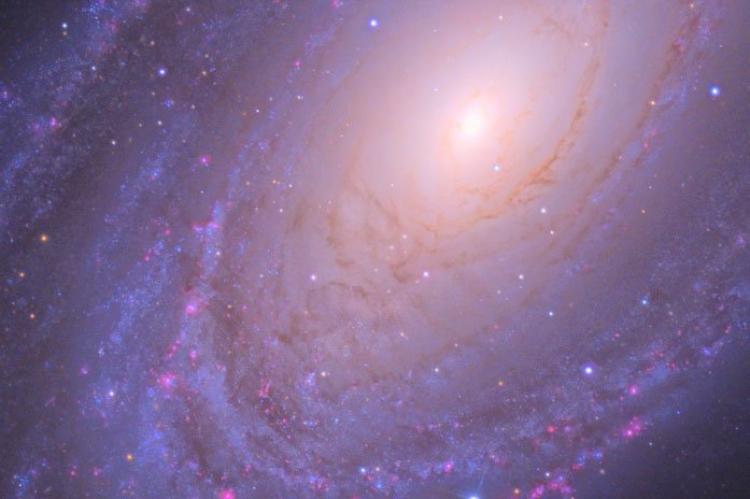 Le bande di polveri nella Galassia M81